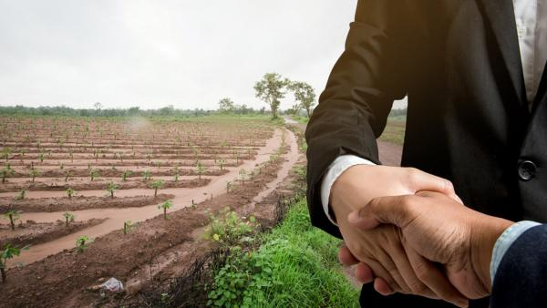 شركة مصر لادارة وتشغيل المزارع والاستشارات الزراعيه