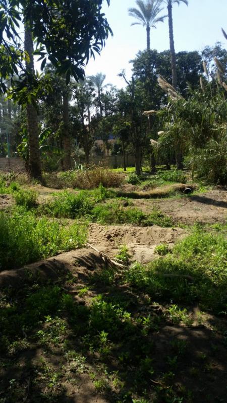 أرض بمنطقة فيلات وقصور بأول طريق مصر اسكندرية الصحراوى